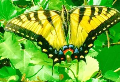 Hip N Zen Butterfly
